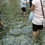 御手洗祭(7月土用)下鴨神社